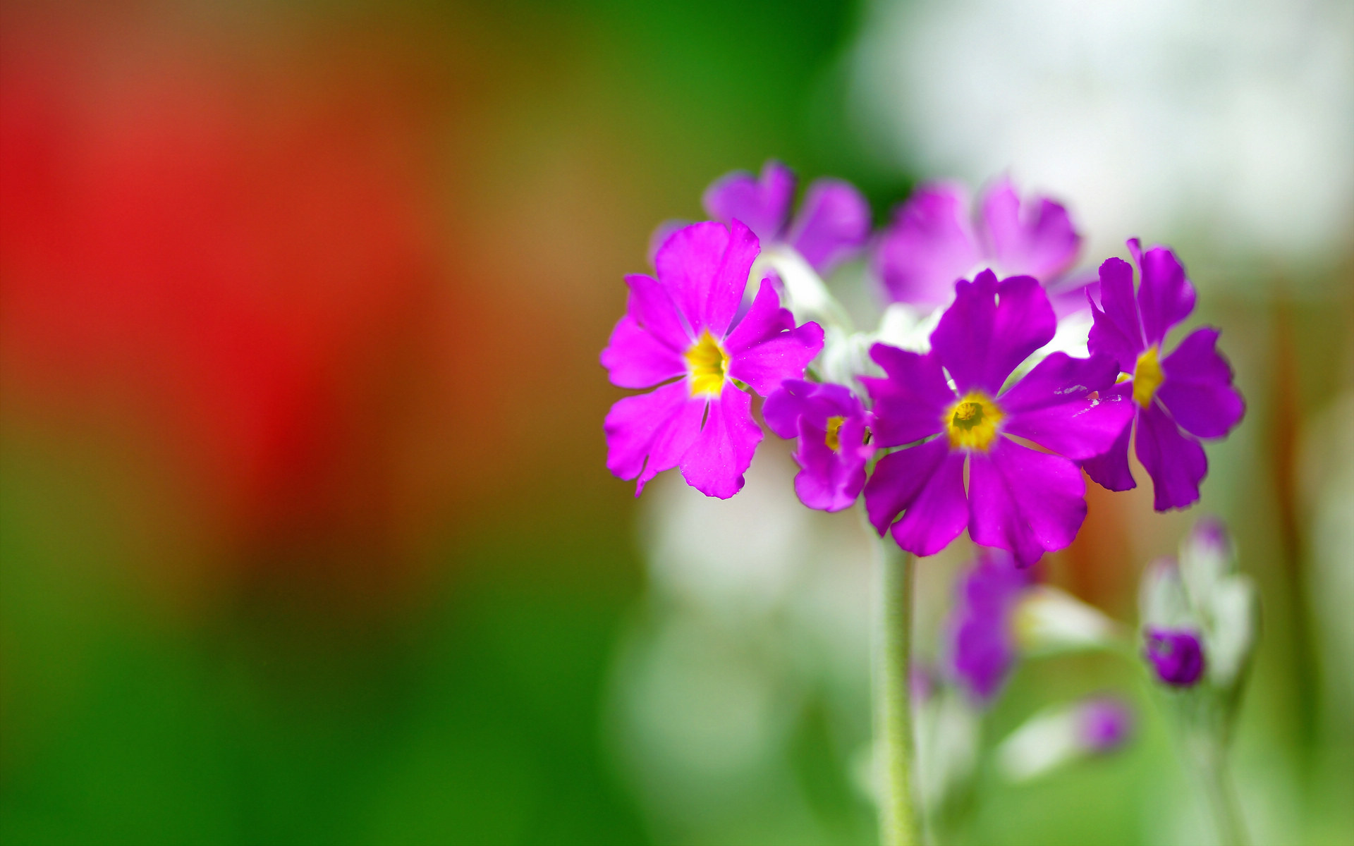 pretty purple macro wallpaper 38014