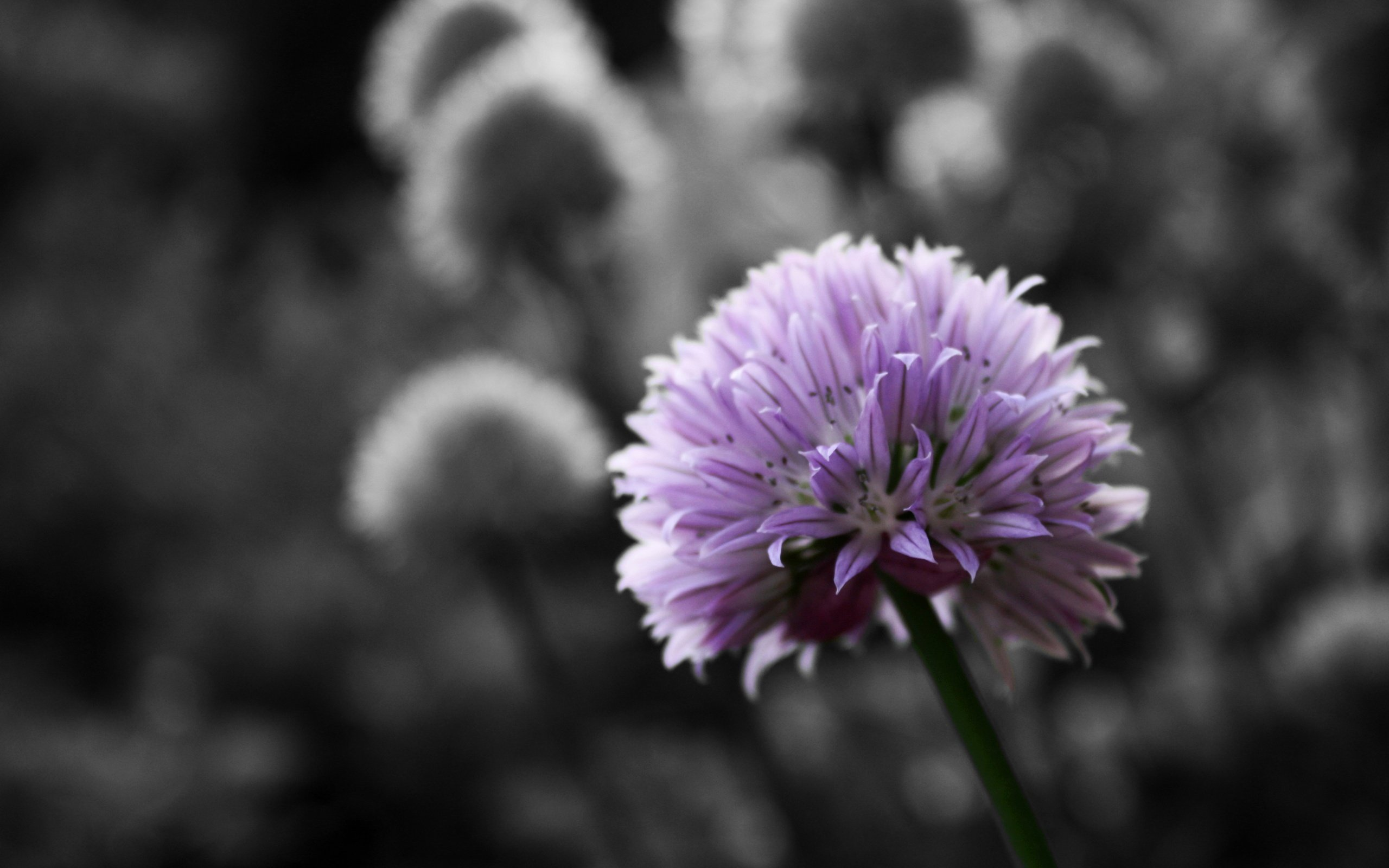 Download Purple Macro Background 37991 2560x1600 Px High Definition