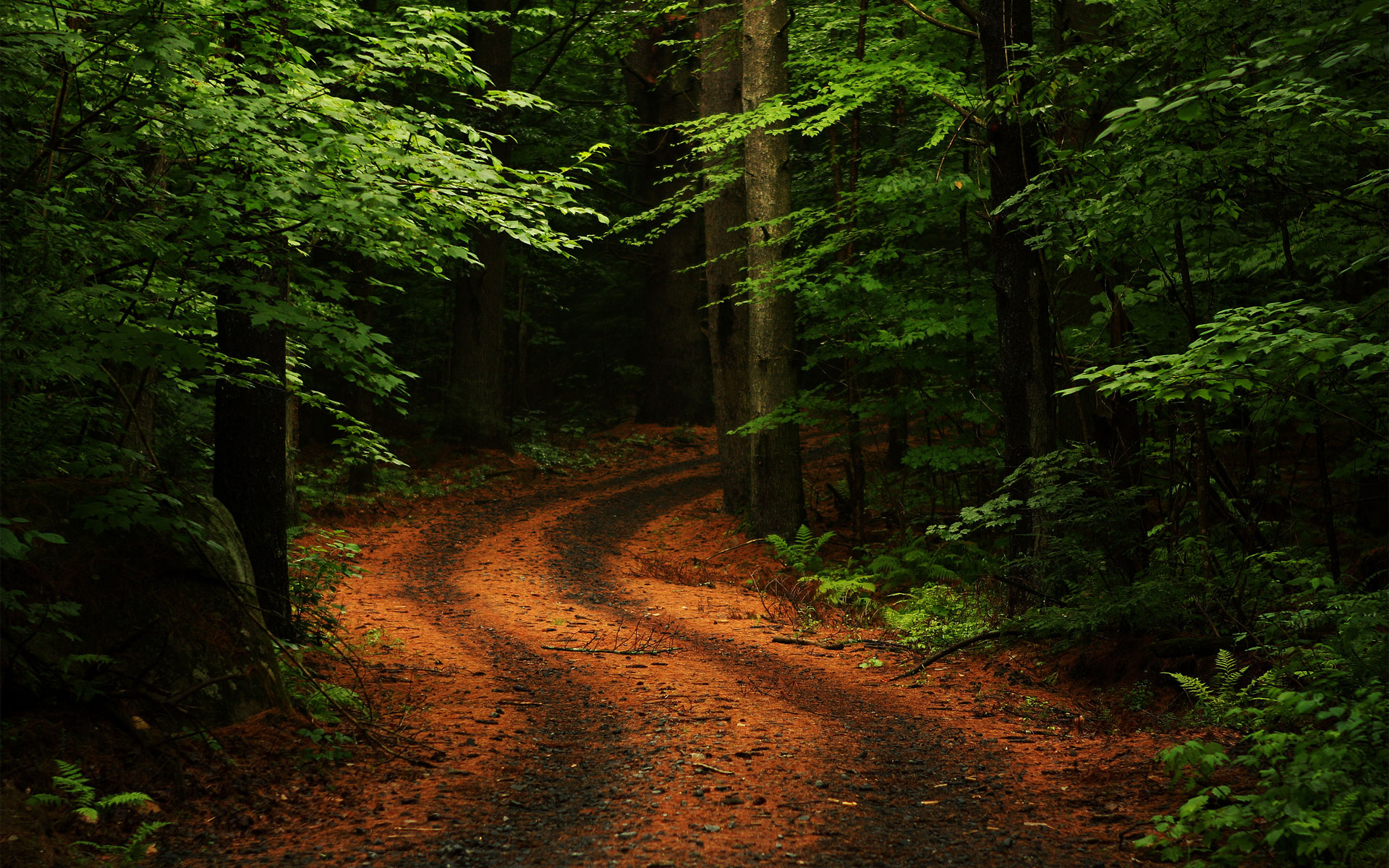 stunning forest road 36169