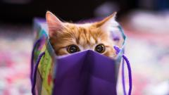 Adorable Cat Close Up Wallpaper 39680