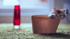 Adorable Cat Mood Wallpaper 43382