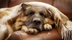 Adorable Couch Wallpaper 42522