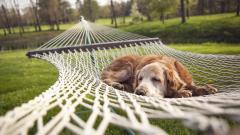 Adorable Hammock Wallpaper 43361