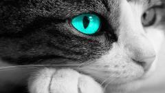 Animal Eye 34518