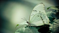 Animal Macro Wallpaper 39257