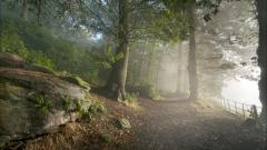 Awesome Forest Road 36165