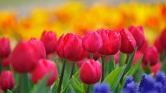Beautiful Bright Flowers Wallpaper 35304