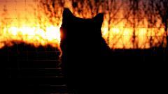 Beautiful Cat Mood Wallpaper 43372