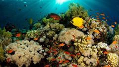 Beautiful Coral Reef Wallpaper 25138