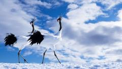 Beautiful Crane Bird Wallpaper 38441