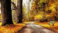 Beautiful Nature Bench Wallpaper 44610