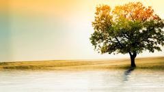 Beautiful Oak Tree Wallpaper 32968