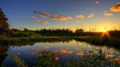 Beautiful Pond Wallpaper 29687