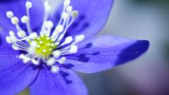 Beautiful Purple Macro Wallpaper 38002