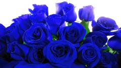 Blue Roses 29658