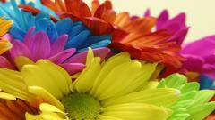 Bright Flowers 35303