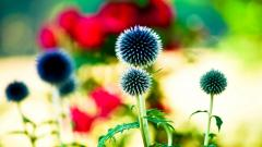 Bright Flowers HD 35306