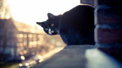 Cat City Wallpaper 44109