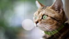 Cat Close Up Wallpaper 39673