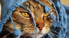 Cat Close Up Wallpapers 39676