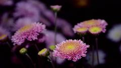 Cool Flowers Background 23959