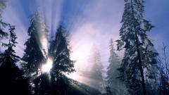 Cool Frozen Forest Wallpaper 34213