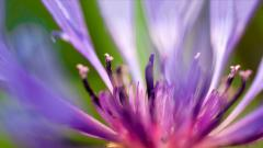 Cool Purple Macro Wallpaper 38013
