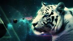 Cool White Tiger Wallpaper 25689