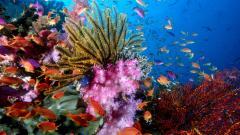 Coral Reef 25132