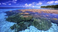 Coral Reef 25140