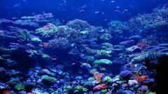 Coral Reef Pictures 25137