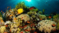 Coral Reef Wallpaper 25131