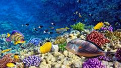 Coral Reef Wallpaper 25141