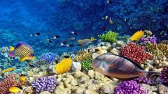 Coral Reef Wallpaper 25141