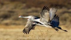 Crane Bird Pictures 38437