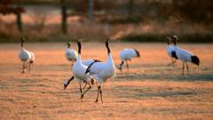 Crane Bird Pictures 38439
