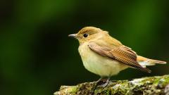 Cute Bird 21814