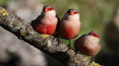 Cute Birds 21806