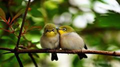 Cute Birds 21812