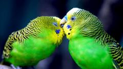 Cute Birds 21813