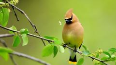 Cute Birds HD 21808