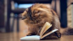 Cute Cat Mood Wallpaper 43377