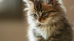 Cute Fluffy Cat Wallpaper 44874