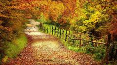Cute Forest Road Wallpaper 36147