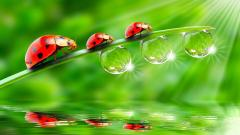 Cute Insect Wallpaper 24739