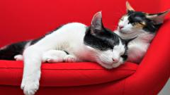 Cute Sofa Wallpaper 42599