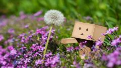 Danbo Wallpaper 24521