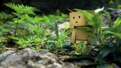 Danbo Wallpaper HD 24535