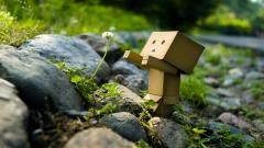 Danbo Wallpapers 24534