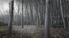 Dark Woods Wallpaper HD 41984
